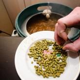 Как варить зерновое пиво дома